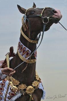 Horse Armor, Horse Gear, Horse Tack, Horse Saddles, Pretty Horses, Beautiful Horses, Animals Beautiful, Akhal Teke Horses, Horse Costumes