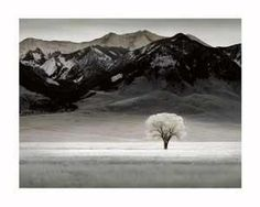 Barewalls has high-quality art prints, posters, and frames. Art Print of Solitary Tree. Wholesale prices on frames. Search 33 Million Art Prints, Posters, and Canvas Wall Art Pieces at Barewalls. Nature Posters, Tree Photography, Office Art, Tree Art, Canvas Wall Art, Art Prints, Painting, Points, Wall Décor