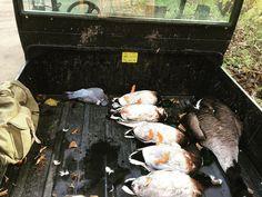 #jagd#jakt#hunt#hunting#jaktforlivet#shotgun#shooting#birdhunting#flinte#pigeon#goosehunting#duckhunt#rådjursjakt#waidmannsheil#passion#jäger#swe_hunters#instachasse#huntsman#12gauge#12ga#niederwild#wasserwild#entenjagd#gänsejagd#fowl by the.passionist