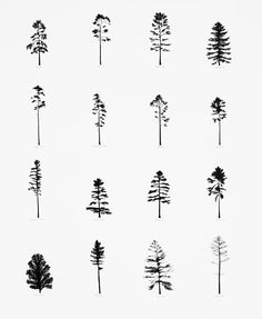 Katie Holten Pine Tree Drawing