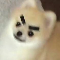 school started again and now all I wanna save is animal pictures, cus im sad. Funny Animal Memes, Dog Memes, Funny Animal Pictures, Funny Dogs, Cute Dogs, Funny Memes, Funny Dog Faces, Cute Little Animals, Cute Funny Animals