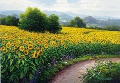 Nesvadba paintings | Field Of Sunflowers by Gerhard Nesvadba Art Print - WorldGallery.co.uk
