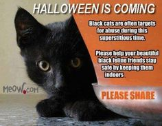 White cats can also be a target but really any pets outside are a target for some doucebag to hurt your furry friend.