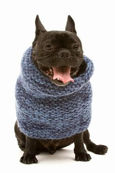 Doggy Sweater which I will be purchasing for my dream pooch (when i find him)! Puppies And Kitties, Bulldog Puppies, Doggies, I Love Dogs, Cute Dogs, Baby French Bulldog, French Bulldogs, Cutest Picture Ever, Big Dog Little Dog
