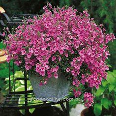 photo lindas flores rosas_zpsvymeguvh.gif