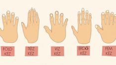 The Shape of Your Hands Reveal a Lot About Your Personality - Mason Clampett Finger Meaning, Shape Meaning, Rough Hands, Types Of Hands, Body Hacks, Hand Type, Palmistry, Hand Shapes, Well Thought Out