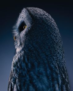 Magnificent Wild Animals Portrait Photography by Tim Flach #photography #wildlife