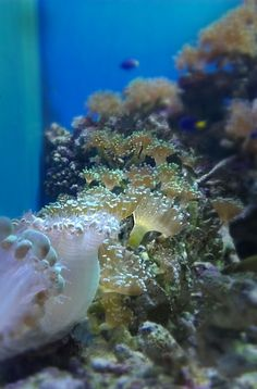 Some coral and underwater plant life at the Moody Gardens in Houston, TX