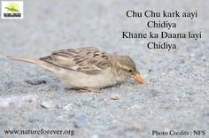 Chidiya aur aur kahaniya :)