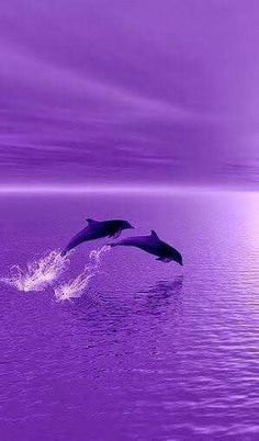Dolphins swimming through water, jumping purple sky