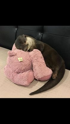 We think you might like these Pins – – Gmail - Happy Tiere Cute Funny Animals, Cute Baby Animals, Animals And Pets, Wild Animals, Baby Otters, Otters Cute, Baby Sloth, Otter Love, Tier Fotos