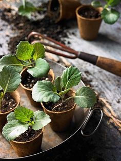 growing plants in seed pots