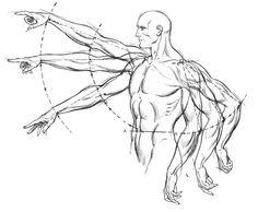 Esta imagem pertence ao livro Dynamic Anatomy do autor e ilustrador Burne Hogarth, representa a visão lógica do movimento.  Aqui temos uma perspectiva em perfil, facilitando a interpretação. www.darlion.com.br
