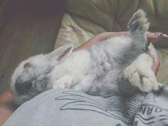 Little cute baby bunny