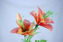 Fire lily with green pistil