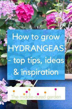 How To Grow Hydrangeas In Your Garden Or Backyard, Which Hydrangeas To Choose And Hydrangea Garden Trends Hydrangea Potted, Hydrangea Varieties, Smooth Hydrangea, Hydrangea Garden, Types Of Hydrangeas, Hydrangea Colors, Smart Garden, Easy Garden, Low Maintenance Garden Design