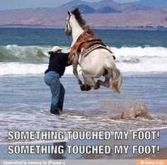 Funny Horse Quotes Touched My Foot - Return to Funny Animal Pictures Home Page Humor Animal, Funny Animal Quotes, Funny Animal Pictures, Cute Funny Animals, Cute Baby Animals, Funny Cute, Animals And Pets, Funny Photos, Super Funny