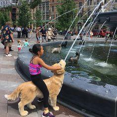 dog park fountain, Berczy Park, Toronto, Canada Art Toronto, Toronto Canada, Dog Park, Special People, Public Art, Natural Wonders, Urban Art, Hilarious, Dogs