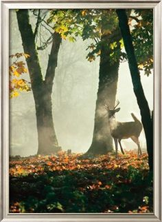 Artist: Cerf dans la Forêt  Amazing!  Lithograph