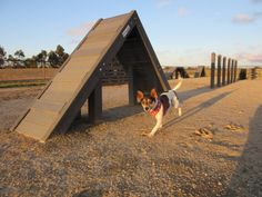 Co at Green Gully Reserve Dog Park Dog Enrichment, Local Parks, Dog Park, Dogs, Green, Animals, Ideas, Animales, Animaux