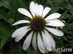 Forestfarm Plant Nursery, Oregon, Bloom, Plants, Vivarium, Planters, Plant, Planting