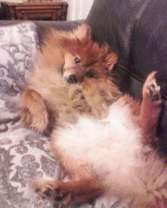 Goofy Dog, Pomeranian, Basil, Kittens, Amp, Dogs, Instagram Posts, Animals, Cute Kittens