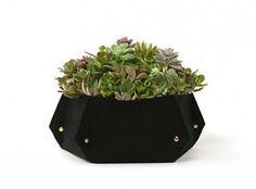 Tina Tiny Planter, made from recycled bottles in the US.