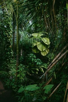 Plant Aesthetic, Nature Aesthetic, Tropical Greenhouses, Tropical Plants, Tropical Forest, Tropical Gardens, Tropical Flowers, Botanical Gardens, Mother Nature