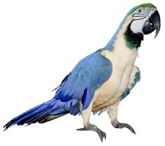 pngs for moodboards Parrot Image, Beach Clipart, Blue Macaw, Animal Categories, Retro Images, Png Photo, Ocean Themes, Free Pictures, Creatures