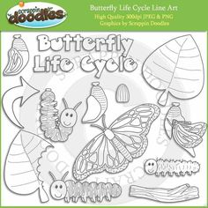 Butterfly Life Cycle Line Art Download