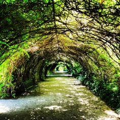 1000 images about botanic gardens on pinterest for Garden trees adelaide