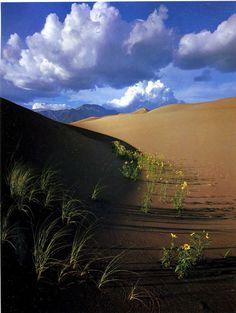 David Muench : Nature America