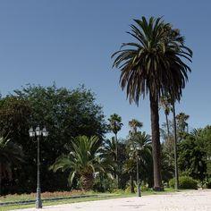 NOW Maroc Vol.1 Destination #Rabat, c'est aussi une visite guidée des jardins de la ville avec la collaboration de l'architecte paysagiste Mounia Bennani. #maroc #morocco