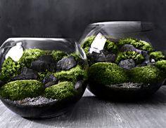 Bio-recipiente terrario con plantas del bosque orgánicas