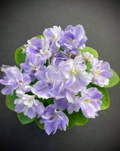 Easy House Plants, Saintpaulia, African Violet, Houseplants, Wordpress Theme, Indoor Plants, Bloom, Inside Plants, Indoor House Plants