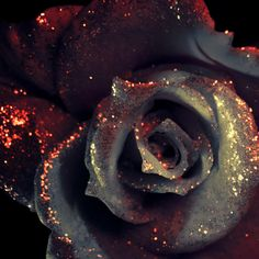 vampire rose by kaboomachu