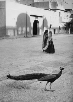 Peacock in Jaipur, India, 1956 by Marc Riboud,Courtesy of the Rubin Museum of Art