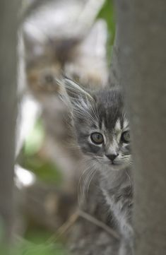 Kittens 3 (by Dan Newcomb Photography)
