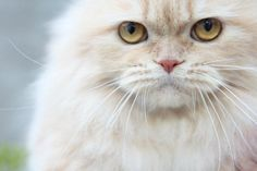 http://vidadepimenta.wordpress.com/  #cat #cats #chat