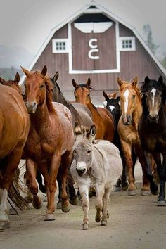 Be the donkey in a crowd of horses.