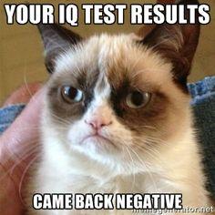 Negative... Grumpy cat, you so funny!