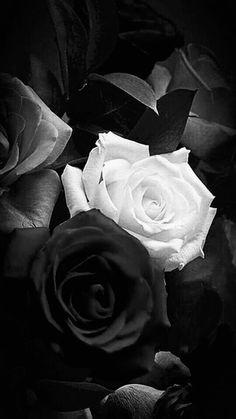 Black Rose Flower, Black And White Roses, Black And White Photo Wall, Beautiful Rose Flowers, Black And White Aesthetic, Blue Roses, Black And White Pictures, Black Flowers Wallpaper, Black Wallpaper Iphone
