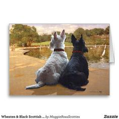 scottish terrier vintage xmas cards | Wheaten & Black Scottish Terriers Greeting Card | Scottish Terriers