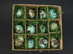 Google Image Result for http://pamelavillars.files.wordpress.com/2010/07/quail_eggs_blue.jpg