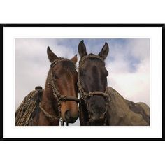Global Gallery Horses Pair Belonging to Chagras, Andes Mountains, Ecuador by Pete Oxford Framed Photographic Print Size:
