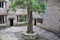 Here is a picture of the Yew tree at Skipton Castle. I loved it so much I had to include one in the courtyard of Bryn Du. The Iron King, Some Pictures, Nerd, Castle, Patio, Outdoor Decor, Otaku, Castles, Geek