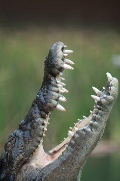 Crocodile by Da Qi Get Informed with Worthy Readings. http://www.dailynewsmag.com