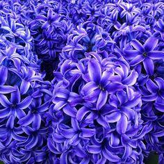 Flowerona Reflects…on the RHS Chelsea Flower Show 2013   Flowerona