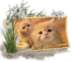 Cat Art, Colours, Blog, Spring, Animales, Blogging