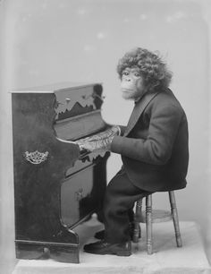 Esau, the circus chimps at the piano. 1900 this is freakin priceless. Sandra   Anne